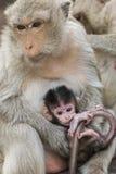 小猴子和母亲 库存照片