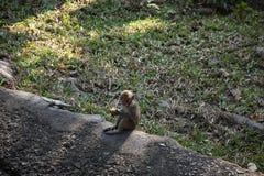 小猴子坐 免版税库存图片