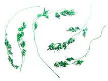 小组干燥绿色花 免版税库存图片
