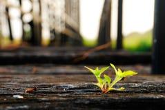 小年幼植物 免版税图库摄影
