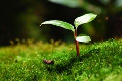 小年幼植物 免版税库存照片