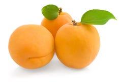 小组新鲜的成熟杏子 免版税库存照片