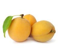 小组新鲜的成熟杏子 库存照片