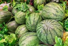 小组新鲜的绿色西瓜在农场待售在作为模板使用的市场上 图库摄影