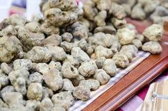 小组从晨曲的白色块菌,意大利 免版税库存图片