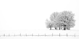 小组树在冬天 免版税图库摄影
