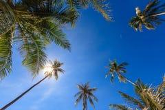 小组椰子树成长为与通过阳光亮光的清楚的蓝天 库存图片