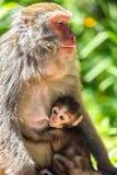 小从母亲的猴子护理 库存照片