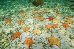 小组海星水下在海底 免版税库存照片
