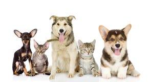 小组猫和狗在前面 免版税库存图片