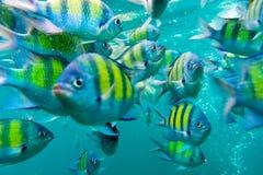 小组珊瑚鱼在安达曼海 库存图片