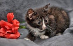 小黑白小猫和红色花 图库摄影
