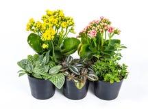 小组白色背景的房子植物 免版税库存图片