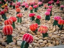 小组美丽的仙人掌植物 免版税库存图片