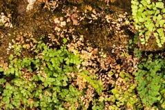 小绿色和布朗叶子在完善的土壤地面背景 免版税库存照片