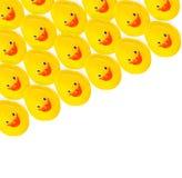 小组黄色橡胶鸭子 库存照片