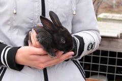 小黑色的兔子 免版税库存照片