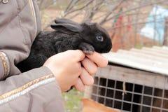 小黑色的兔子 免版税图库摄影