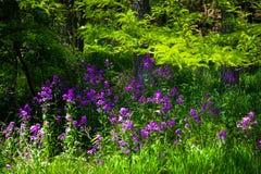 小组紫色花 免版税库存图片