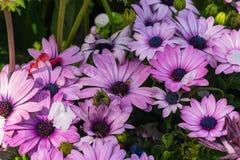 小组紫色花 免版税图库摄影