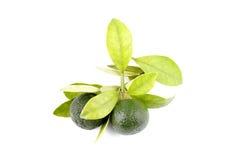 小组绿色calamansi和叶子使用而不是在白色背景隔绝的柠檬 免版税库存图片