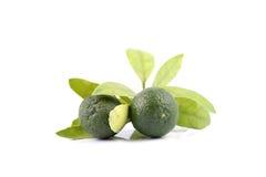 小组绿色calamansi和叶子使用而不是在白色背景隔绝的柠檬 免版税库存照片