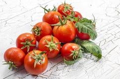 小组蕃茄 库存照片