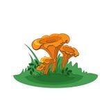 小组黄蘑菇蘑菇 免版税库存照片