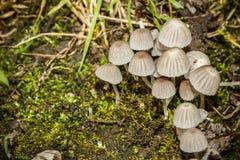 小组蘑菇 免版税库存图片