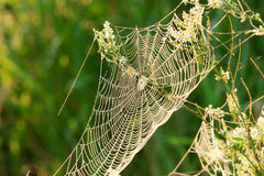 小滴蜘蛛网 库存照片