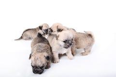 小组逗人喜爱的小狗 免版税库存照片