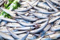 小组金枪鱼在鱼市上 库存照片