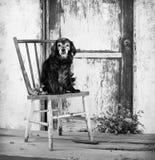 小年长资深猎犬混合狗坐老古色古香的椅子由毂仓大门 库存照片