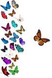 小组飞行蝴蝶 图库摄影