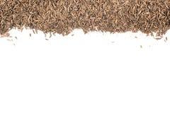 小茴香籽框架 库存照片