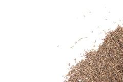 小茴香籽框架 图库摄影