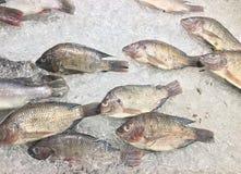 小组鱼,结冰在冰的Oreochromis nilotica 免版税库存照片