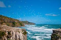 小组gannets高在天空 免版税库存照片