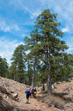 小组turistovpodnimayutsya在具球果的小山 图库摄影
