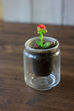 小kalanchoe homeplant在一个透明罐 红色Kalanchoe花 库存图片