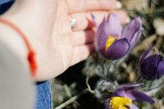 少女和睡眠草花的手 免版税库存照片