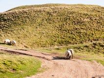 少女城堡铁古老的堡垒风景自然草原a 库存照片