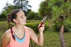 少妇切口和修剪盆景杉树 免版税图库摄影