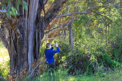 少妇在澳大利亚森林里 免版税库存图片
