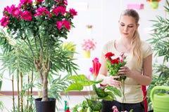 少妇水厂在她的庭院里 免版税图库摄影
