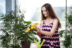 少妇照料家庭植物 免版税库存照片