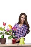 少妇照料家庭植物 免版税图库摄影