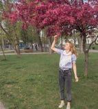 少妇看苹果的花开了花树 免版税图库摄影