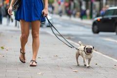 少妇走与一个哈巴狗在城市 免版税库存照片
