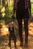 少妇走的法国牛头犬在日落的森林里 库存图片